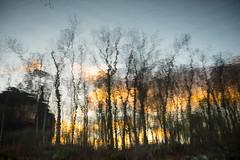 untitled (Homemade) Tags: water reflection sunset trees dusk lewisboro southsalem newyork westchestercounty ny nikon2470mmf28 nikkor2470mmf28