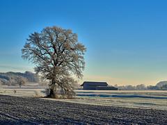 Frozen Morning (W_von_S) Tags: frozenmorning landscape landschaft paysage paesaggio ebersberg oberndorf icy cold rauhreif gefroren baum tree bavaria bayern deutschland germany wvons werner sony outdoor 2016