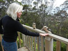 Delicate (LeelooDallas) Tags: australia tasmania woods tree forest landscape dana iwachow animal bird kookaburra kingfisher nikon coolpix s9100
