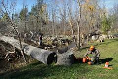 The Cutting on Sideroad 20 (Doris Burfind) Tags: wood stumps fall autumn chopping cutting trees saw people men sideroad rural countryside stream creek felling silvercreek georgetown halton hills