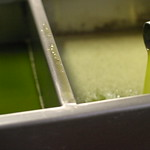 Brand new Olive Oil thumbnail