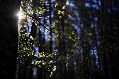 Im Frühlingswald (Helmut Reichelt) Tags: frühlingswald buchenblätter grün frisch morgen april frühling wald schwaigwall geretsried bayern bavaria deutschland germany leica leicam typ240 captureone11 dxophotolab leicasummilux50mmf14asph expöore
