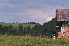 """SF__19_00022  - En Corjon, Alpine pasture farm - Switzerland (Valentin Vuichard) Tags: valentin vuichard valentinvuichard vv gruyère greyerz fribourg freiburg freiburger fribourgeoises suisse schweiz switzerland préalpes alps alpen mountain mountains berg bergen montagne montagnes prealps voralp voralpen préalpe alpage alpestre paysage country landschaft landscape landwirtschaft canon eos 300v """"canon 300v"""" rebel ti"""" chalet d'alpage agriculture étable rural bâtiment agricole decay rusted old abandonned abandonnée ruine ruines ruined détruits insalubre patrimoine alpine pasture farm encorjon corjon rossinière vaud"""