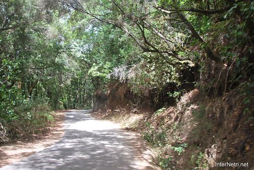 Національний парк Гарахонай, Гомера, Канарські острови  InterNetri  0731