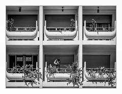 Sur ma photo j'ai mis des cactus aïe aïe aïe! ouille! (francis_bellin) Tags: 2018 festival blackandwhite streetphoto street noiretblanc monochrome rue photoderue cactus balcons juillet avignon
