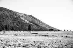 Edge of the Peaks (benakersphoto) Tags: landscape landscapephotography flagstaffarizona arizona arizonatowns flagstaff sanfranciscopeaks northernarizona blackandwhite nikon nikkor bandw black white blackandwhitelandscape mountain tree grass