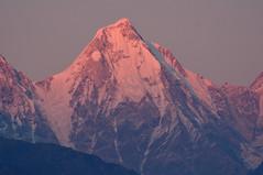 The glow of sunset. (draskd) Tags: panchachuli panchachuli4 munsiyari munsiari landscape sunset light sunsetglow peak himalayanpeak himalayan sunsetlight pithoragarh uttarakhand alpenglow