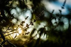 Early Morning Feeling (NathalieSt) Tags: europe nature nikon nikond750 nikonpassion nikonphotography