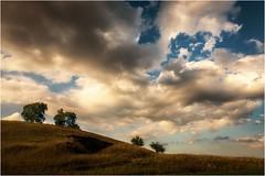 Vier Bäume im kniehohen Gras (linke64) Tags: thüringen deutschland germany himmel wolken natur landschaft wiese gras bäume hügel