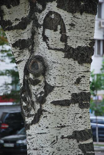 Київ, бульвар Лесі Українки  InterNetri Ukraine 275