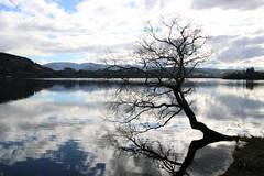 The tree (Karen Pincott) Tags: tree water reflections clouds laketutira hawkesbay lake winter