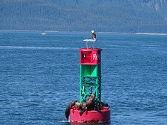DSC03610 (jrucker94) Tags: juneau alaska cruise cruiseport eagle seal seals buoy ocean inlet red green