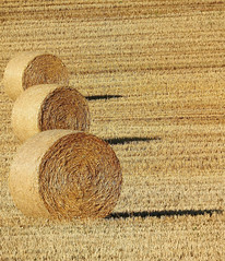 Threesome (StrongGrace Photography) Tags: nikoncoolpixp610 schaafhausen feld field ernte harvest strohballen baleofstraw stronggracephotography ©ninahesse shadows schatten sky himmel sun sonne published elbejeetzelzeitung 164jgnr175