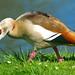 Nun mal die Größeren Vögel zu Wasser und an Land!
