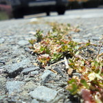 DSC03363 thumbnail