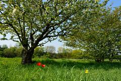 spring actually (e-box 65) Tags: flower trees spring frühling nikon nikkor d7200 18 105 green