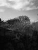 20180412-Image 3 (7) (yabankazi) Tags: fuji ga645 ga645wi fomapan 100 roll 120mm 45mm fujinon f4d23 kodakanalog af autofocus analoque analog lensses canakkale assos turkey behramkale bizimoralar bnw blackwhite bw blanconegro blackandwhite film filmcamera