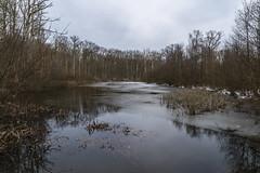 un étang en forêt en hiver (dangui89) Tags: naturepaysage hiver glace gel ciel nuages neige france bourgogne yonne guillierdanielphotofr