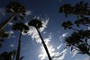 Miami Beach, Florida (Andy Ziegler) Tags: palmtrees silhouette sun florida miami miamibeach canon6d vacation holiday paradise clouds tall warmth backlighting