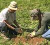 oklawaha pollinator planting 042118-38 (NCAplins) Tags: hendersonville northcarolina unitedstates us