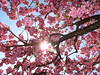 Bümpliz-Niederbottigen (karoo79) Tags: bümpliz bern 3018 niederbottigen wald forest flowers blumen frühlingserwachen blossoms woods springtime sunnyweather sonnenschein blauerhimmel