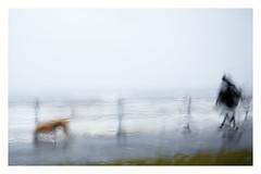 I'm just a walking the dog (AEChown (away now)) Tags: rainyday englishsummer rain dogwalkers dogwalking dog man seaside blur promenade bexhill