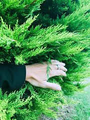 Find me (marcus.greco) Tags: hand nature green colors
