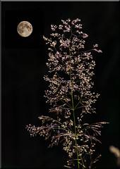 _NNU8730-2 (o.penet) Tags: lune moon nights normandie penet nikon nature