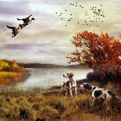 Hunting day (jaci XIII) Tags: gansos aves cão caça lago paisagem amanhecendo geese birds dog hunting lake landscape dawning