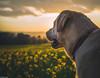 TAGA-13 (jordicostatomé) Tags: labrador dog urbex