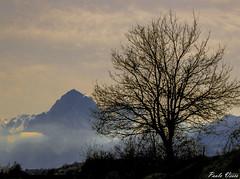 Il Gran Sasso (Pablos55) Tags: albero tree montagna mountain gransasso panorama lanscape