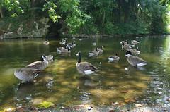 JLF17875 (jlfaurie) Tags: jardin garden bagatelle paris france francia parc parque 22072018 mpmdf jlfr jlfaurie mechas roseraie fleurs roses rosas