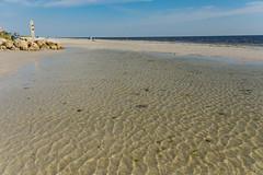 Ripples (Carol Matthai Photography) Tags: fortmyers wildlife sandpiper stiltedsandpiper shells beach sand osprey ospreywithfish plover greatwhiteegret water nikon nature birds