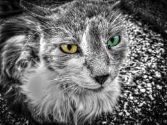 Street fighter (M Malinov) Tags: fighter street cat animal animals monochrome mono котка bw eyes