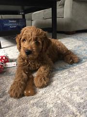 Ginger's handsome boy Finn!