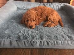 Ginger's adorable boy Finn!
