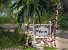 Welcome Tropical Heat (Sannita_Cortes) Tags: animals decor decoration home landscaping pinkmagic swank tropical animal building bush decorating furniture furnituredecor garden houseshomes nature tree secondlife sl virtualworld virtual virtuallandscape virtualnature virtualdecoration