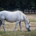 Breed: Horse thumbnail