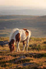 Stop Foaling Around (Rich Walker75) Tags: horse horses pony ponies foal foals nature animal wildlife dartmoor devon landscape landscapes landscapephotography canon england efs1585mmisusm eos eos80d evening