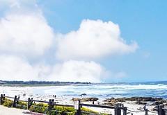 97156E28-CA66-4289-B9F6-A985F8565A12 (kismer32) Tags: beach 17 miles drive summer ocean sea landscape california flowers beautiful water sky nature blue white green waves sand