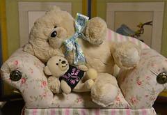 Baby Bears Need Lots of Sleep (BKHagar *Kim*) Tags: bkhagar bear teddy teddybear toy animal stuffed fur furry couch sleep nap htbt