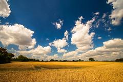 Summertime (Ostseeman) Tags: kornfeld rüdigerreimers sommer blauerhimmel wolken schleswigholstein