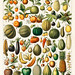A vintage illustration of a wide variety of fruits and vegetables from the book, Nouveau Larousse Illustre (1898), by Larousse, Pierre, Augé and Claude, Digitally enhanced from our own antique chromolithograph.