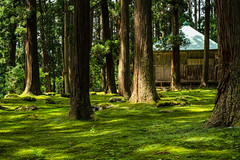 Beautiful green space (Toshio.Nomura.Photographer) Tags: moss tree green sanctuary temple carlzeiss zeiss zeisscameralenses sonnar sony a7rii α7rii forest planar1450 planar planart1450