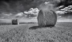 Waiting (David Feuerhelm) Tags: bw blackandwhite monochrome noiretblanc schwarzundweiss contrast wideangle lowviewpoint sky cloud atmospheric straw field bales landscape suffolk nikon d750 1635mmf4 farming agriculture