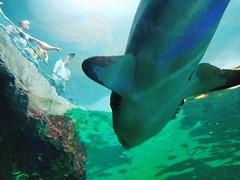 20180526_160756 (giltay) Tags: shark pointing
