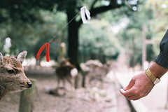 000015 (stonkolegg) Tags: japan nippon nara nikon fm nikkor 50mm 14 film photography fuji fujifilm superia iso 400 27 exp