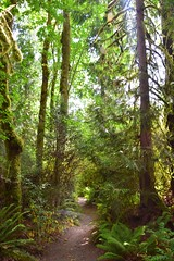 DSC_0222 (gtsieg) Tags: grandforest bainbridgeisland