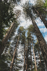 Rising Trees (benjamin.t.kemp) Tags: trees bark wood forest sky clouds vertical pyreneese colours colors colorsinourworld green dark light shadow