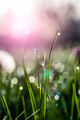 green grass with drops of dew on a spring meadow. (radebg) Tags: sunshine blur landscape sunset closeup image background wet defocused sun summer outside growth scenic dew grassland green shine herb grass sunny sunrise flare plant season nature park spring lawn outdoor sunlight garden blurred clean clear morning scene meadow shiny beautiful macro sunflare blade freshness health sunbeam drop lush light field